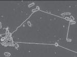 Бактерии подпитывают друг друга при помощи «нанотрубок»— Ученые