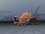 Ученые: ВСША обнаружен ранее неизвестный смертельный вирус