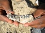 Ученые нашли останки древнейшего предка рода людей