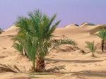 Запоследние 10 лет впустыне Сахара увеличилась влажность
