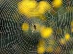 Создано самое прочное вмире волокно изпаутины— Ученые