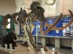 Первый вРоссии центр молекулярной палеонтологии откроется вЯкутске