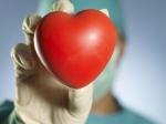 Создано искусственное сердце без пульса— Ученые