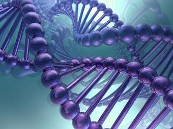 Исследование: Часть генов люди получили отвирусов игрибов
