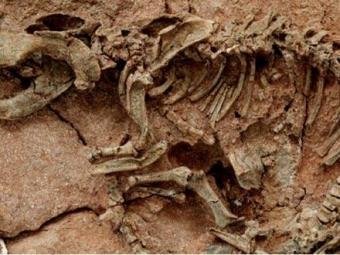 Ученые раскрыли загадку происхождения самых странных животных, описанных Дарвином