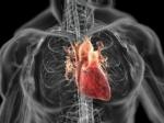 Специалисты смогут регенерировать сердце человека, перенесшего инфаркт