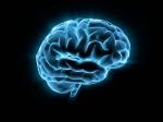 Учёные: мозг воспринимает слова непобуквам, аввиде единого целого