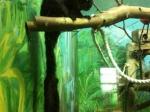 Гигантские белки-летяги поселились вНовосибирском зоопарке