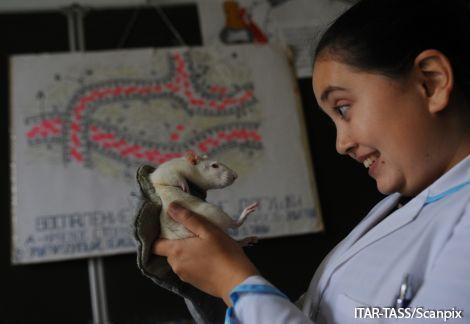 Биологам удалось вырастить крыс женского пола смужским мозгом
