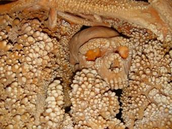 Ученые выделили ДНК древнейшего вмире неандертальца