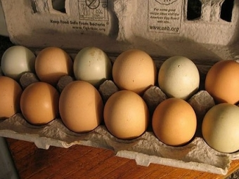 Ученые: куриные яйца спасают мужчин отдиабета 2 типа