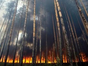 Россия оказалась мировым «лидером» поуничтожению леса