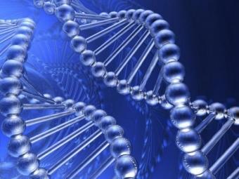 Геном большинства людей содержит 1-2 мутации