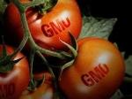 Доказано: ГМО-продукты приводят к бесплодию