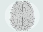 Мозг разрушает сам себя, чтобы учиться— Ученые