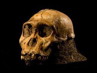 Найден древнейший предок человека