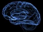 Квечеру объем человеческого мозга становится меньше— Ученые