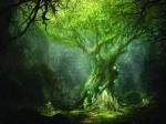 Из-за глобального потепления деревья станут опасными— Ученые