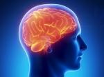 Вантимикробном щите мозга обнаружен «черный ход»