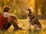 Собаки «считывают» социальные отношения между людьми— Ученые