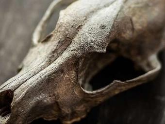 Ученые: Человечество ускорило массовое вымирание видов в114 раз
