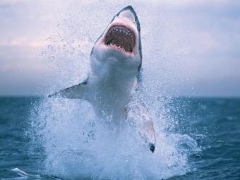Стресс заставляет акул нападать налюдей— Биологи