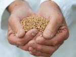 Ученые развенчали миф опользе цельнозерновых продуктов