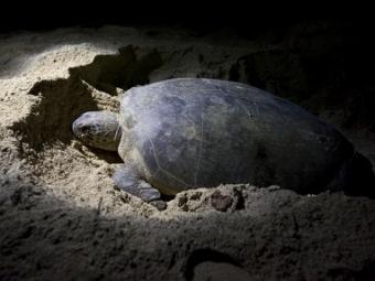 Ученые обнаружили останки предка современных черепах