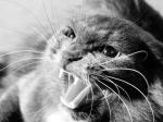 Домашние кошки тоже испытывают стресс— Ученые