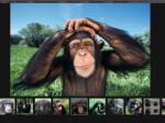 Шимпанзе обладают моральными принципами— Ученые