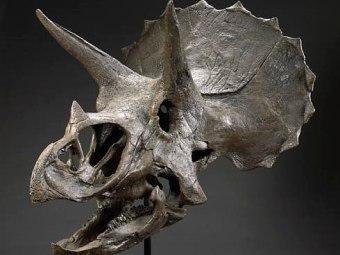 Нейронные сети помогут в поисках костей динозавров
