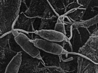Амазонские грибы оказались способны питаться пластиком
