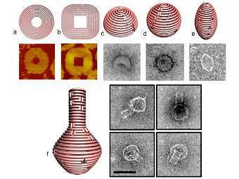 Специалисты по ДНК-оригами создали нанопосуду