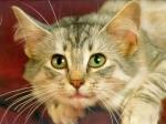 Чтобы лучше работать, нужно смотреть на снимки вашей кошки или собаки