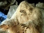 ДНК-экспертиза показала связь йети с древними полярными медведями
