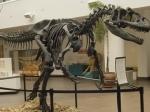 Скелет 17-метрового динозавра будет продан сегодня на аукционе в Великобритании