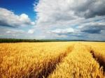 Ученые ожидают критическое снижение урожайности уже к 2050 году