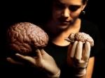 После сорокалетия головной мозг у людей уменьшается