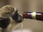 Ученые: алкоголь способствовал развитию человека из обезьяны