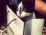 Ученые исследовали влияние популярности на длительность кошачьей жизни
