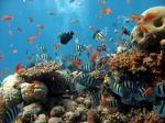 Четверть морских животных ирастений может исчезнуть сЗемли— Ученые