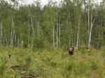 В Хабаровском крае нашли тела пропавших полицейских
