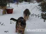 Пропала собака: вКомсомольске-на-Амуре подросток похищал породистых животных