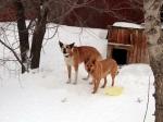 ВКазани проводится доследственная проверка пофакту нападения собак наженщину