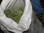 ВНовосибирске ищут владельца мешка марихуаны