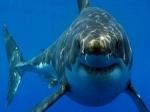 В Приморье акула напала на человека