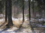 Зарезанную спатронами вкармане нашли влесу Подмосковья