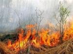 Засутки вКалининградской области зарегистрировано 27 палов травы