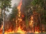 НаДальнем Востоке зарегистрирован первый вэтом году лесной пожар