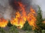 В США горят лесные пожары
